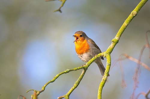 small-bird-2224946_640